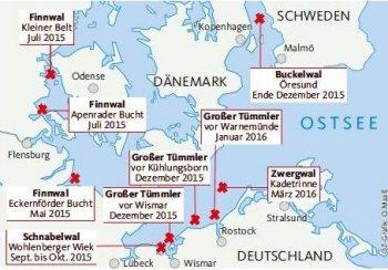katzenhalter in deutschland